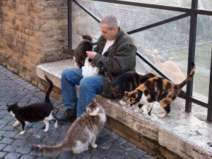 Les chats à Rome.