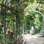 Pourquoi les roses de la roseraie municipale méritent une visite