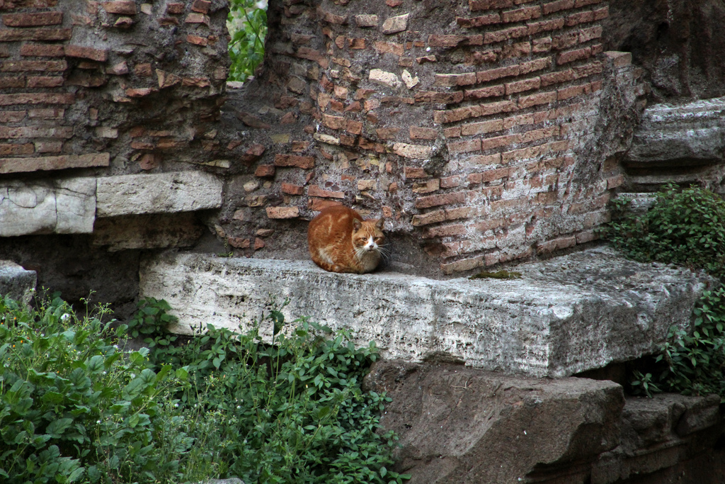 travaux chats rome largo di torre argentina