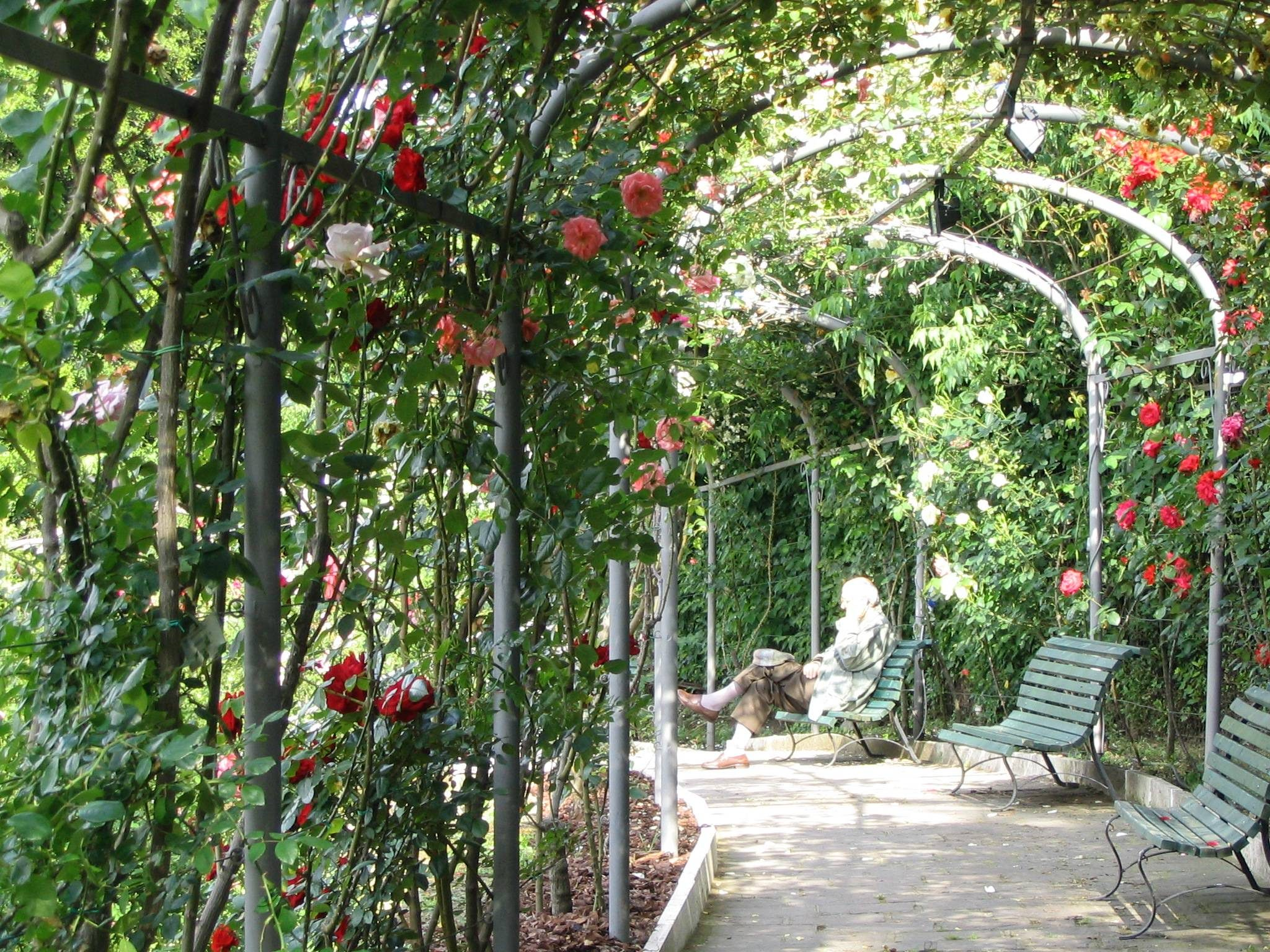 Les roses de la roseraie municipale.